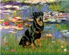 LILIELS <br>& Rottweiler #3