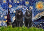 STARRY NIGHT<br>& Schipperke