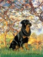 SPRING<br>& Rottweiler