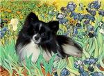 IRISES<br>& Pomeranian (BW)