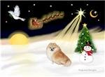 NIGHT FLIGHT<br>& Pomeranian