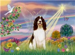 CLOUD ANGEL<br>& English Springer Spaniel (Liver)