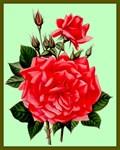 Red, Red Roses Vintage Flower Print
