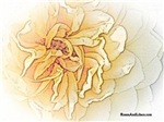 Ye Olde Rose