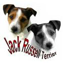 Jack Russell Terriers