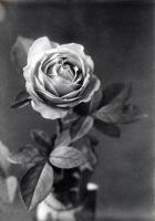 1902 Flowers