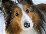 Snow Whiskers