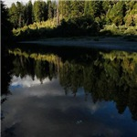 Eel River Reflection Scene