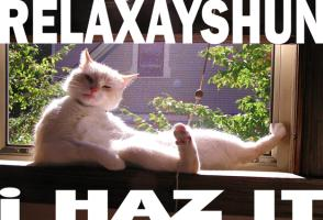 Relaxation Cat