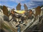 Drago valley