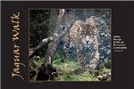 Jaguar Walk