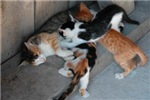 Mama Cat and Cute Kittens
