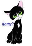 Home? (cat)