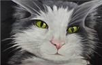 Pandie Cat