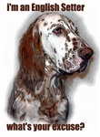 English Setter Excuse