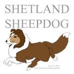 Shetland Sheepdog Colors