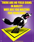 No Yield In Agility