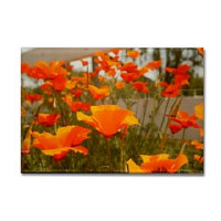 sf bay gifts - Calfornia Poppy Magnets