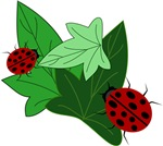 Ladybugs and Ivy