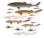 Deep Sea Sharks 2