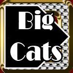 Big Cats Shirts and Gifts
