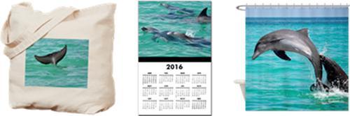 Key West Dolphin Playground