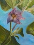 Eggplant Blossom 2