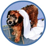 WHEATEN TERRIER: