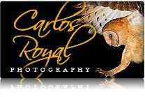 Carlos Royal Photography