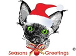 Devon Rex Christmas Kitten