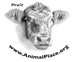 Howie the Cow, Animal Place