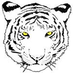 Tiger Leonard's Shirts