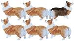 Six Pemmies