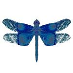 Midnight Dragonfly