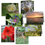 Nature Photography Note Cards