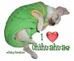 I Love Chihuahuas BabyPorsha