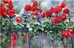 Rose Climbers