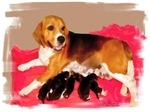 Beagle mum nursing pups