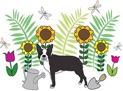 Pet Illustration & Text Designs