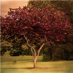 Red Tree of Love Landscape