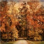 Autumn's Entrance
