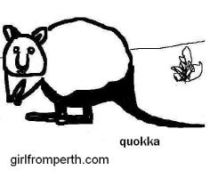 Australian Quokka - large
