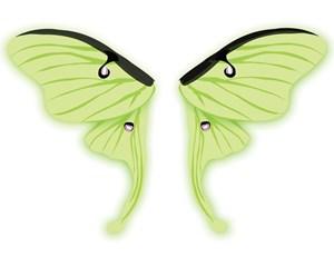 Luna Moth Fairy Wings