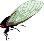 Cicada T-shirts