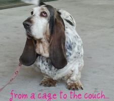 from a cage to the couch