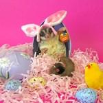 Easter #2