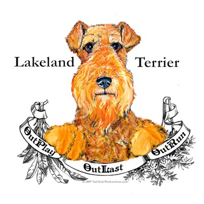 Lakeland Terrier COLLECTION!