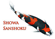 Showa Sanshoku
