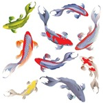 New 9 Butterfly Koi Designs