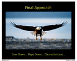 Final Approach Bald Eagle Collection